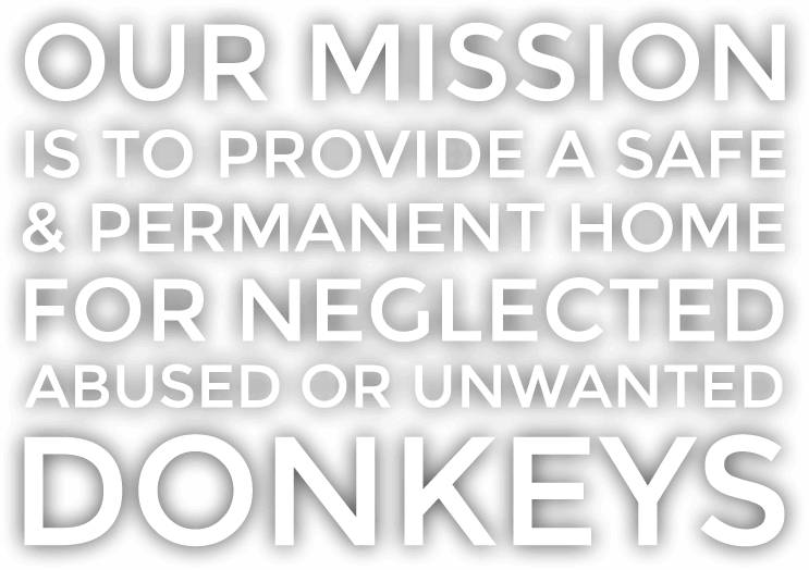 Our Mission: To Provide a Safe and Permanent Home for Neglected, Abused, or Unwanted Donkeys.