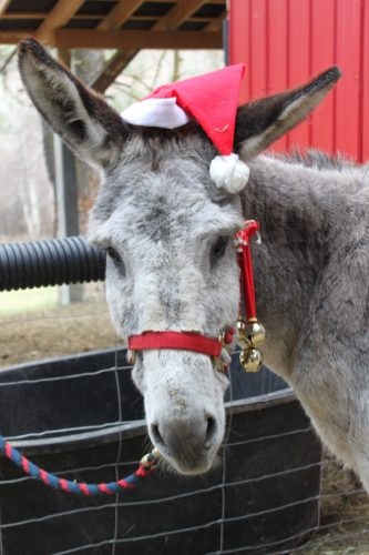 Christmas with the Donkeys