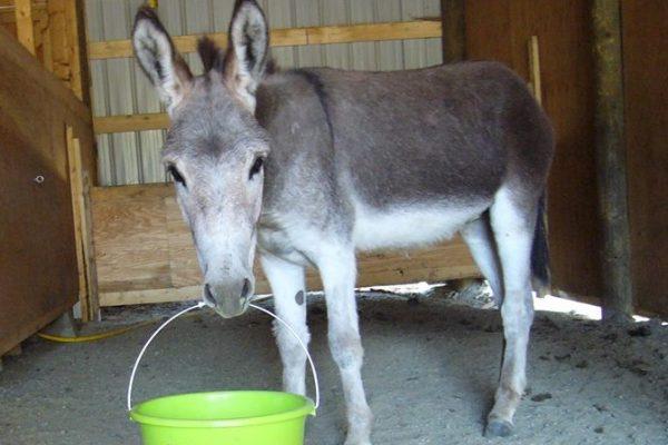 turtle valley donkey refuge  u00bb julio