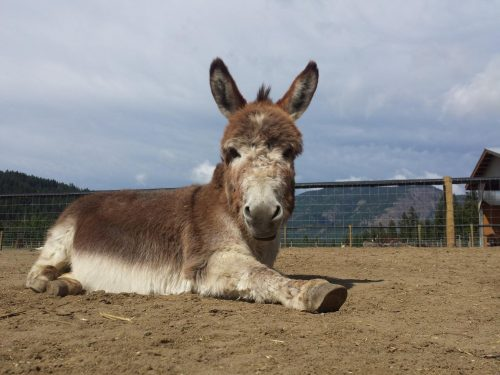 DONKEY REFUGE OPEN TO VISITORS 5 DAYS PER WEEK