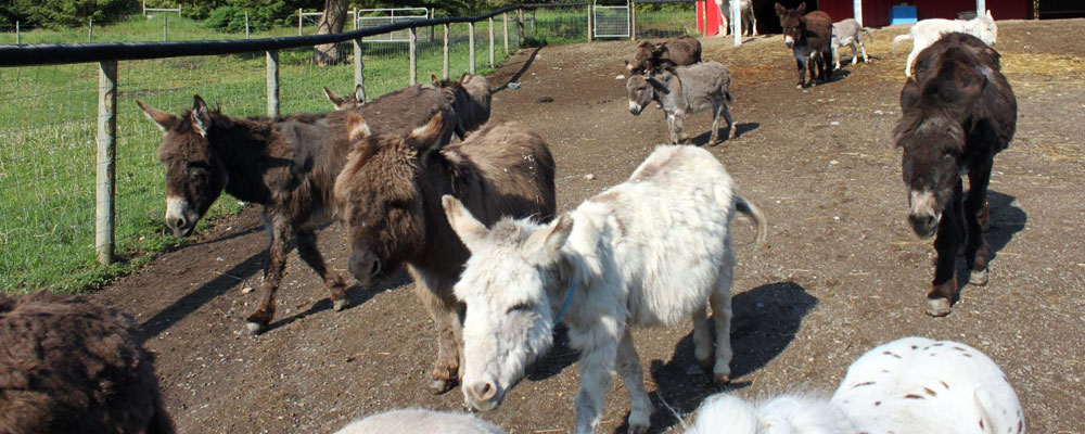 Slideshow Picture - Turtle Valley Donkey Refuge